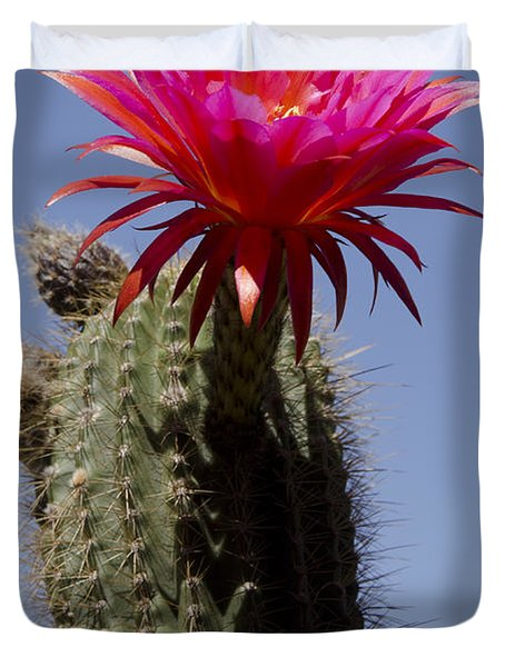 Pink Cactus Flower Duvet Cover by Jim And Emily Bush