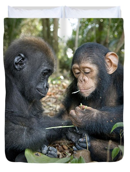 A Baby Gorilla And A Chimpanzee Duvet Cover