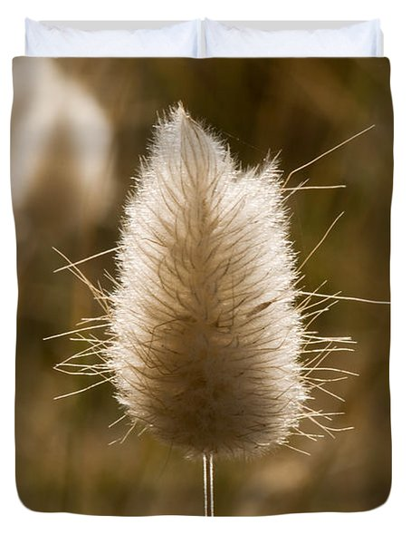 A Beautiful Seed Pod With Beautiful Sun Reflection Duvet Cover