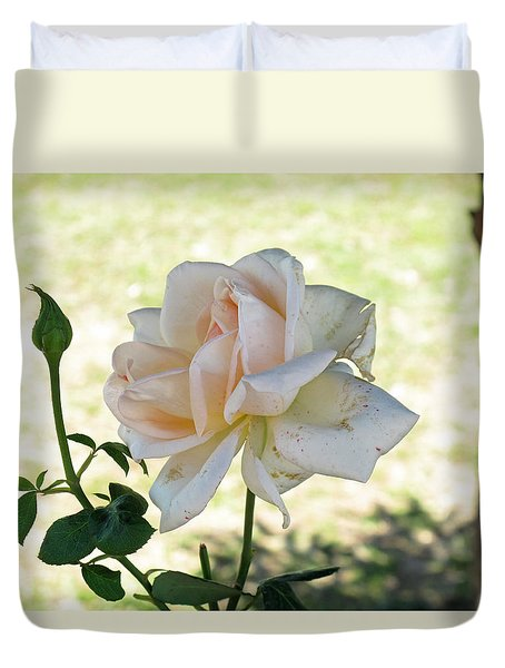 A Beautiful White And Light Pink Rose Along With A Bud Duvet Cover by Ashish Agarwal