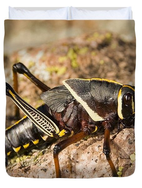 A Colorful Lubber Grasshopper Duvet Cover by Jack Goldfarb