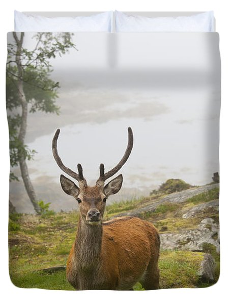 A Deer Stands In A Foggy Meadow By The Duvet Cover by John Short