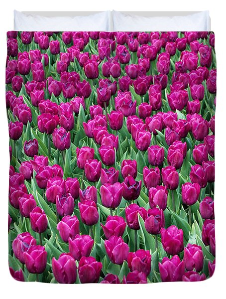 Duvet Cover featuring the photograph A Field Of Tulips by Eva Kaufman