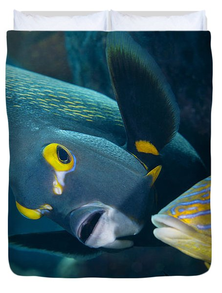 A French Angelfish Swims Up Close Duvet Cover by Terry Moore