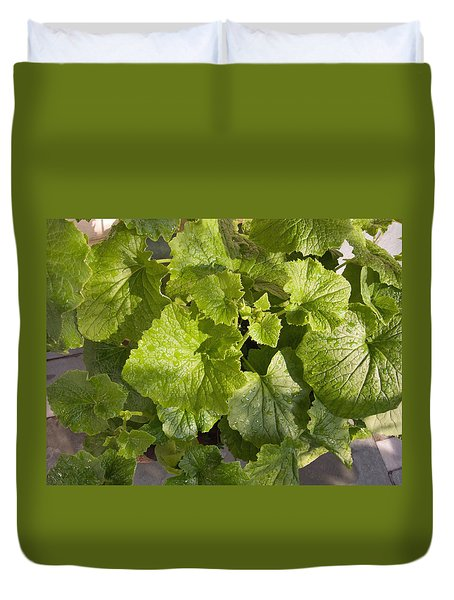 A Green Leafy Vegetable Plant After Watering In Bright Sunrise Duvet Cover by Ashish Agarwal