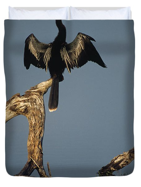 A Male Anhinga Perches On A Tree Stump Duvet Cover
