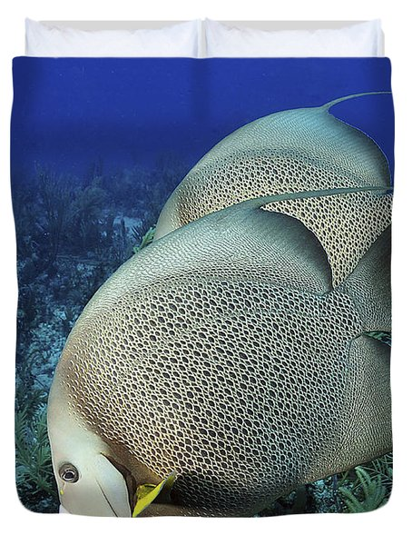 A Pair Of Gray Angelfish On A Caribbean Duvet Cover by Karen Doody