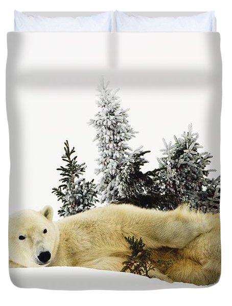 A Polar Bear Ursus Maritimus Duvet Cover by Richard Wear