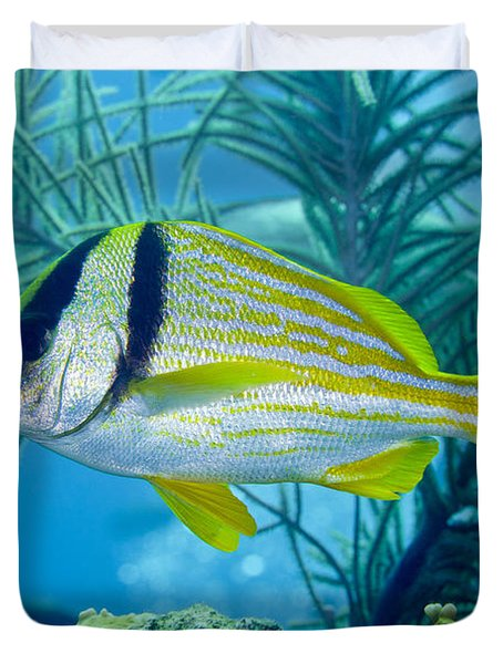 A Porkfish Swims By Sea Plumes Duvet Cover by Terry Moore