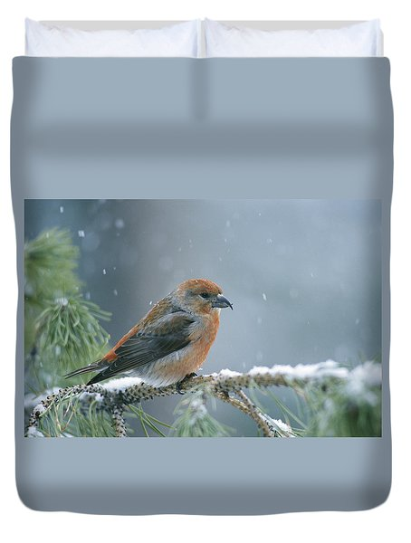 A Red Crossbill Loxia Curvirostra Duvet Cover