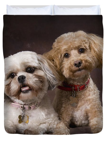 A Shihtzu And A Poodle On A Brown Duvet Cover by Corey Hochachka