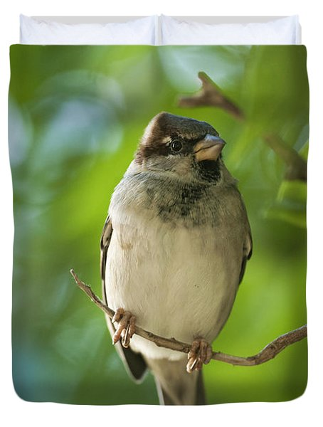 A Sparrow Perched On A Small Branch Duvet Cover by Ben Welsh