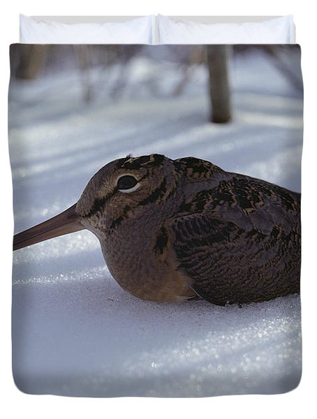 A Woodcock Sits In The Snow Duvet Cover