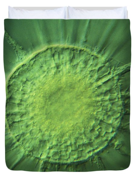 Actinophyrs Lm Duvet Cover by MI Walker