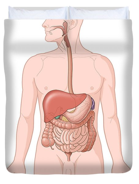 Adult Male Digestive System Duvet Cover