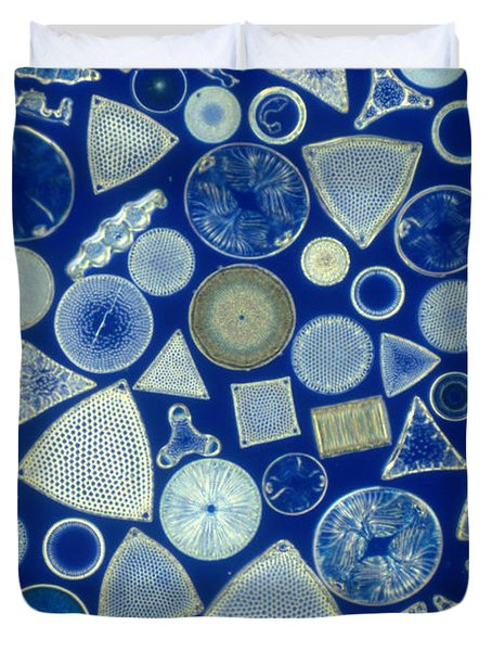 Algae, Fossil Diatoms, Lm Duvet Cover by M. I. Walker