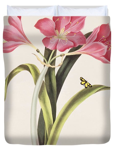 Amaryllis Purpurea Duvet Cover by Robert Havell