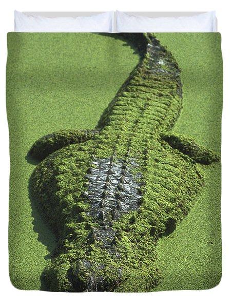 American Alligator Alligator Duvet Cover by Heidi & Hans-Juergen Koch