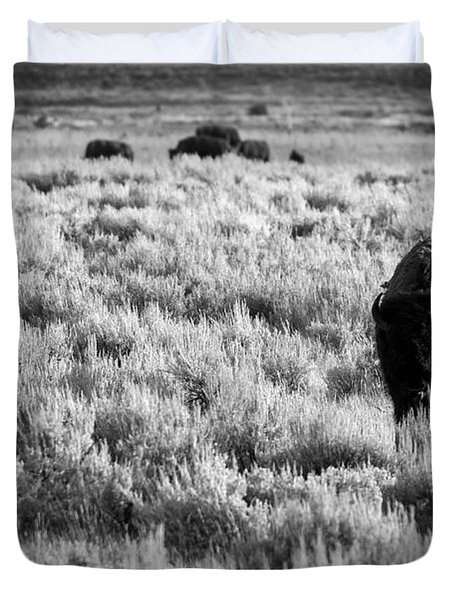 American Bison In Black And White Duvet Cover by Sebastian Musial