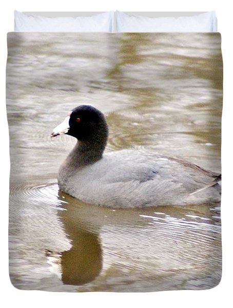 American Coot 1 Duvet Cover by Joe Faherty