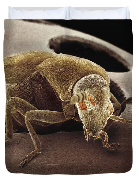 American Seed Beetle Sem Duvet Cover by Albert Lleal