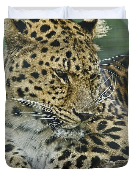 Duvet Cover featuring the photograph Amur Leopard by JT Lewis