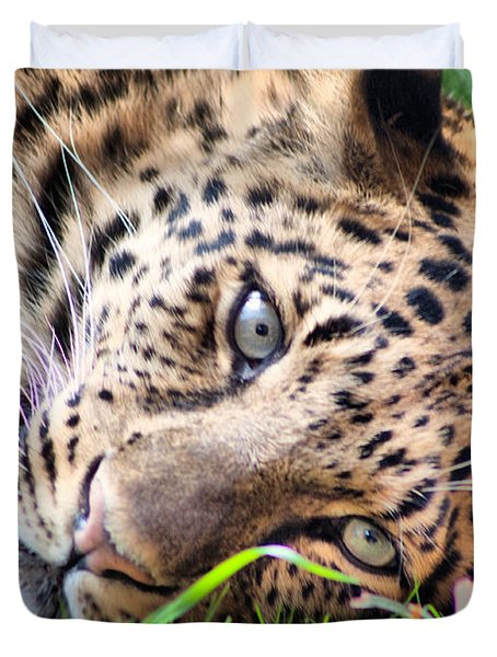 Duvet Cover featuring the photograph Amur Leopard by Lynne Jenkins
