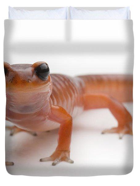 An Ensantina Salamander Duvet Cover