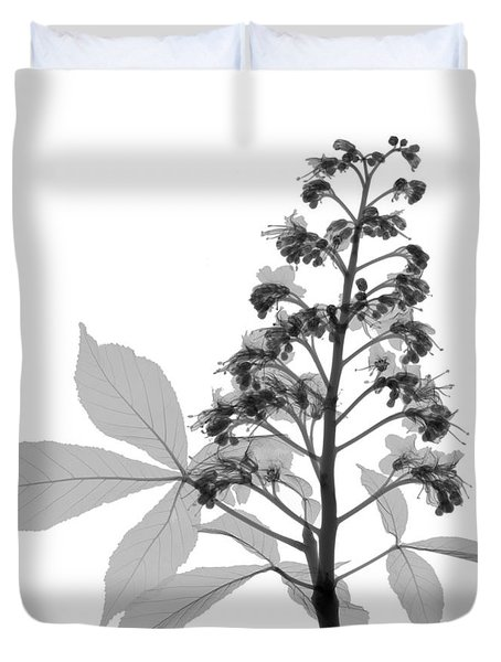 An X-ray Of A Chestnut Tree Flower Duvet Cover by Ted Kinsman