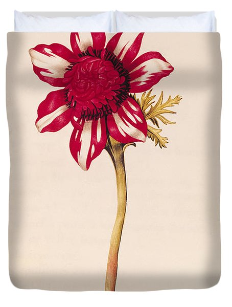 Anemone Duvet Cover by Nicolas Robert