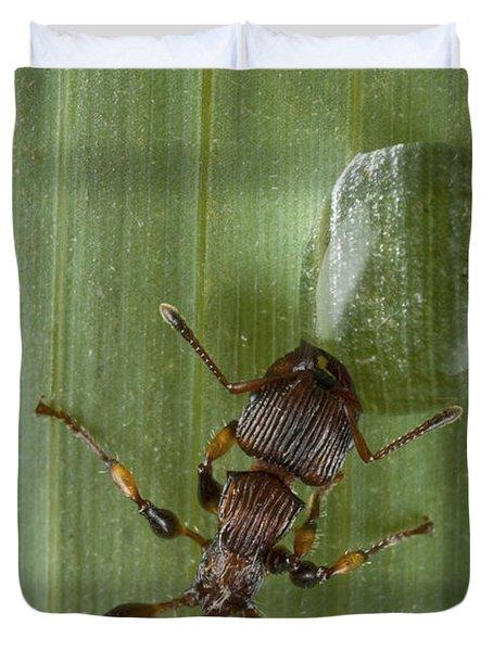 Ant Drinking From Water Droplet Papua Duvet Cover by Piotr Naskrecki