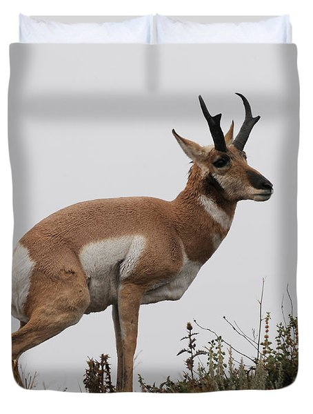 Antelope Critiques Photography Duvet Cover