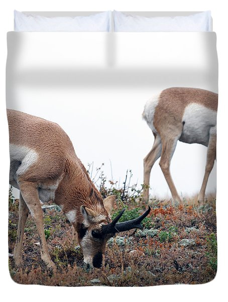 Duvet Cover featuring the photograph Antelopes Grazing by Art Whitton