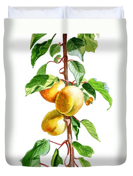 Apricots Duvet Cover by Irina Sztukowski