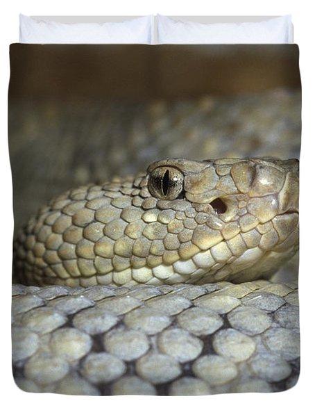Aruba Rattlesnake Crotalus Unicolor Duvet Cover by Gerry Ellis