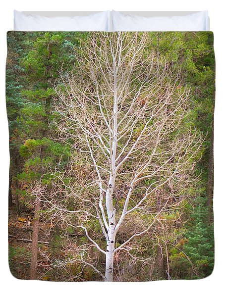 Aspen Tree Forest Road 249 Duvet Cover by Donna Greene