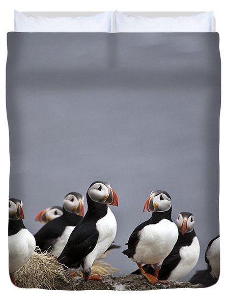 Atlantic Puffins On Cliff Edge Duvet Cover by Greg Dimijian