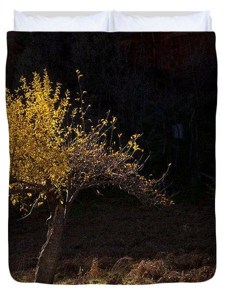 Autumn Light Duvet Cover by Mike  Dawson