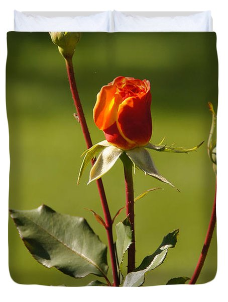 Autumn Rose Duvet Cover by Mick Anderson