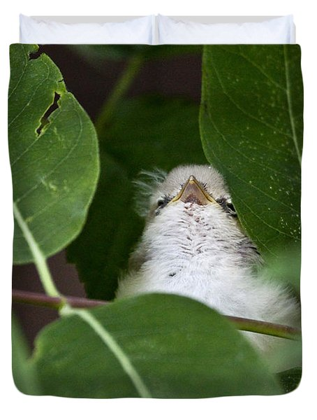 Baby Bird Peeping In The Bushes Duvet Cover by Jeannette Hunt