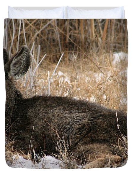 Baby Deer At Rest Duvet Cover by Nola Lee Kelsey