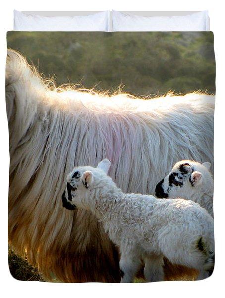 Baby-lambs Duvet Cover by Barbara Walsh