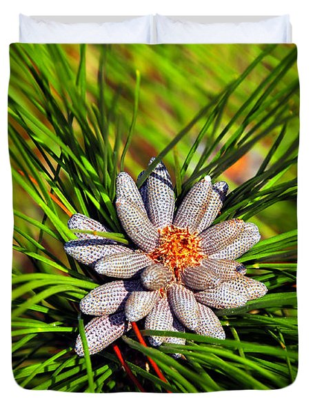 Baby Pine Cones Duvet Cover by David Lee Thompson