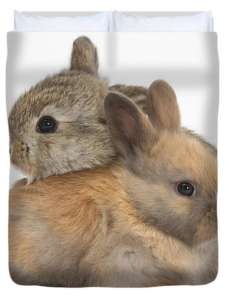 Baby Rabbits Duvet Cover by Mark Taylor