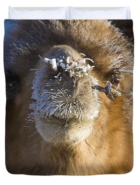 Bactrian Camel Camelus Bactrianus Duvet Cover by David DuChemin