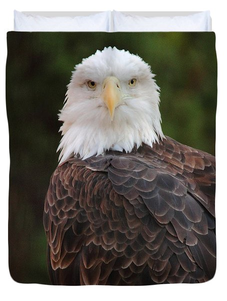 Bald Eagle Duvet Cover by Coby Cooper