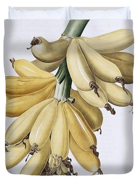 Banana Duvet Cover by Pierre Joseph Redoute