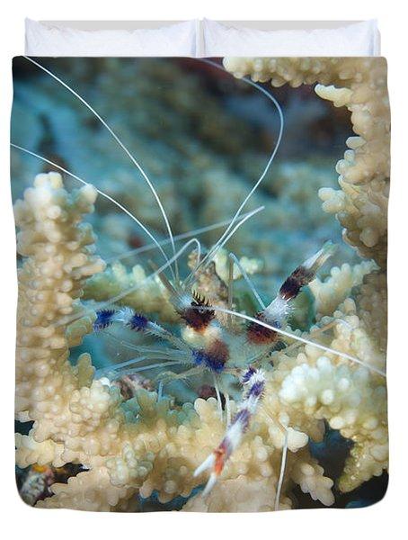 Banded Coral Shrimp Amongst Staghorn Duvet Cover by Steve Jones