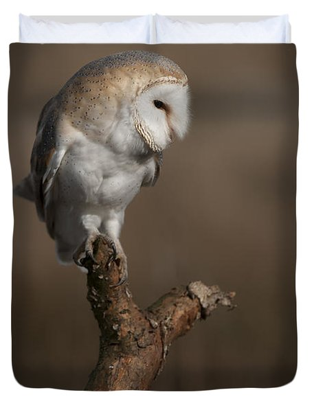 Barn Owl On The Lookout Duvet Cover