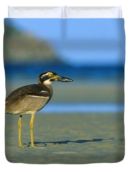 Beach Stone-curlew Duvet Cover by Bruce J Robinson